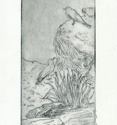 Drawing Prints Farm Cove Sydney